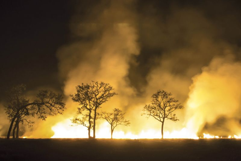 forest fire at night with few trees