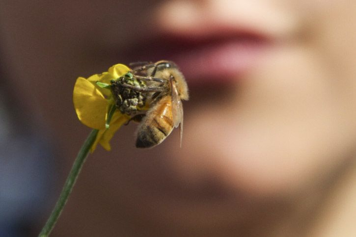 photo of child watching bee on a buttercup