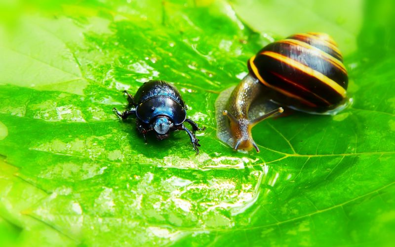 A forest beetle and a snail on a leaf