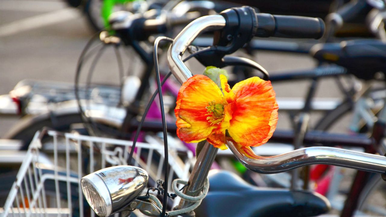 A close up of a bike's handlebars with a n orange flower attached to them