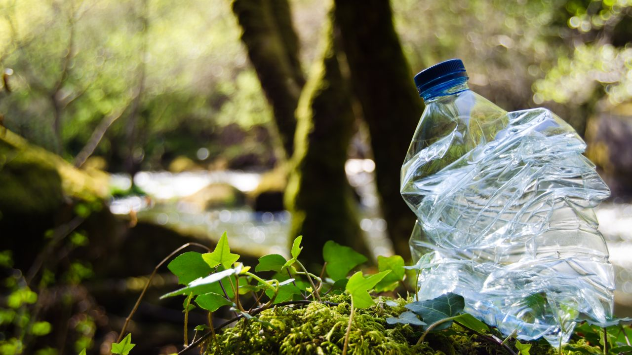Plastic bottle in woodland