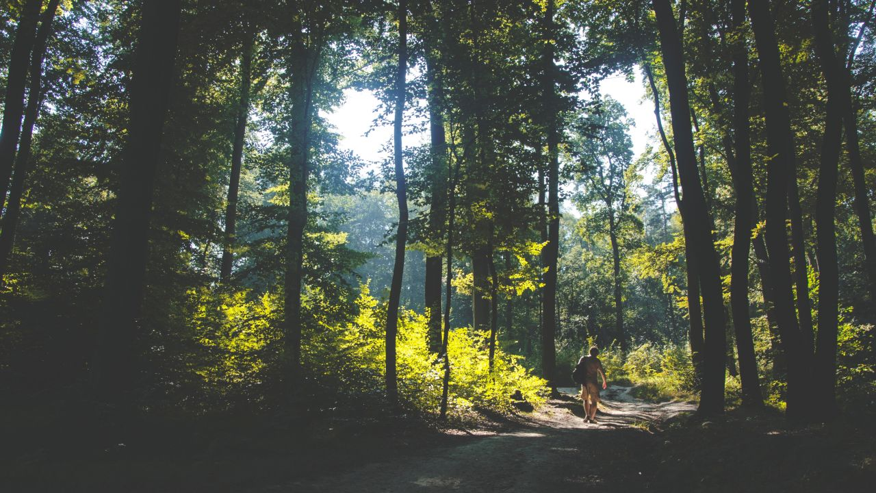 photo of man walking in woods