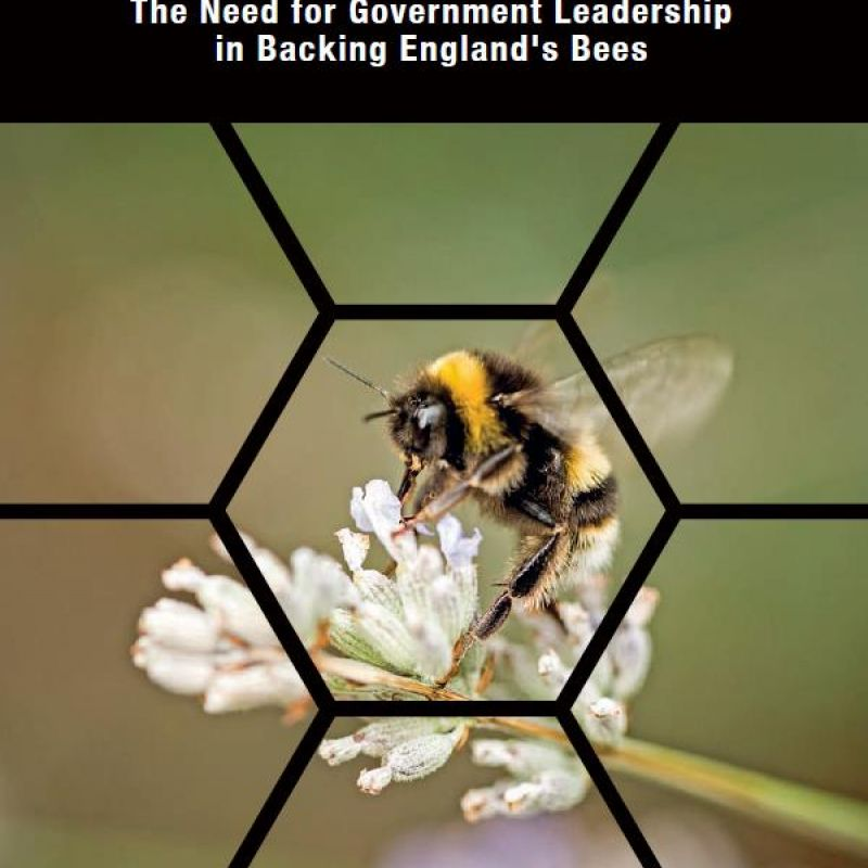 Policies for Pollinators - front cover