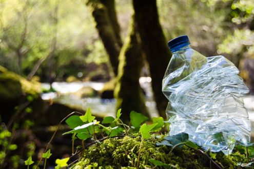 Plastic bottle in woodland