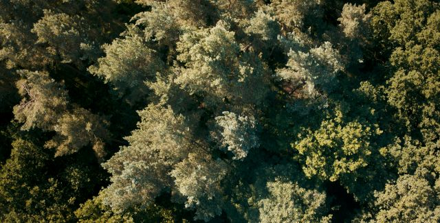 aerial photo of deciduous woods