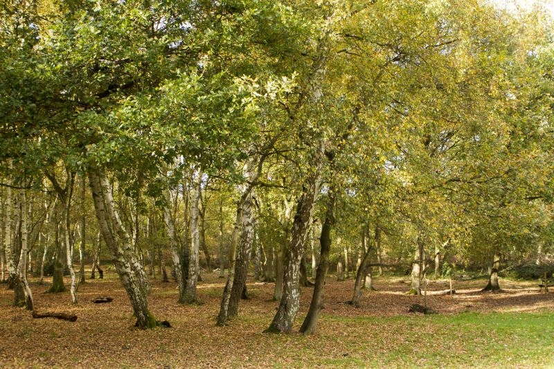 Photo of trees , Sherwood Forest