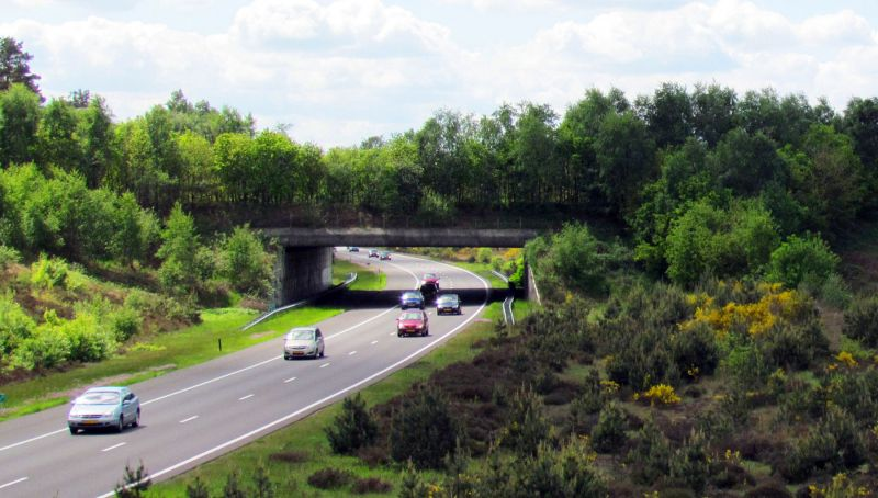 """Green bridge"" planted with trees and bushes over dual carriageway road and cars"