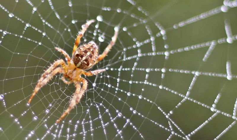 Fear of spiders 8 reasons to like them more friends of the earth for What does a garden spider look like
