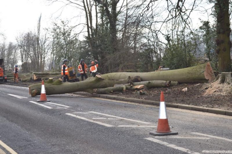 Mature beech trees in Darlington were cut down to make way for executive homes