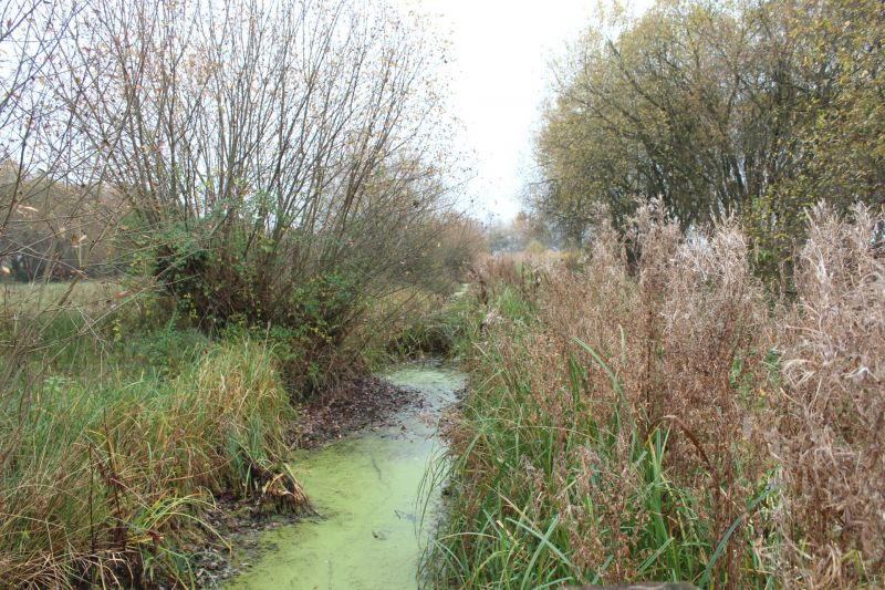 Magor marsh, Gwent Levels. Stream, grasses and trees.