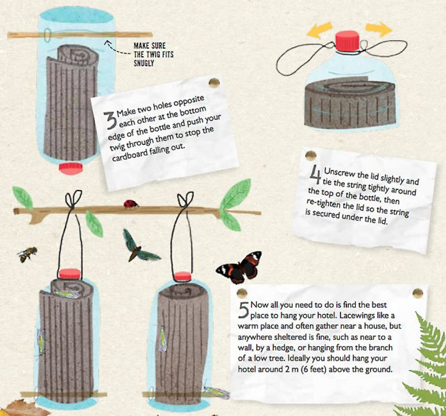 Making a lacewing hotel, pt12 - Illustrations by Tonwen Jones