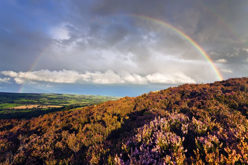 Moorland, Yorkshire, UK. Heather in foreground, fields behind, clouds and rainbow above.