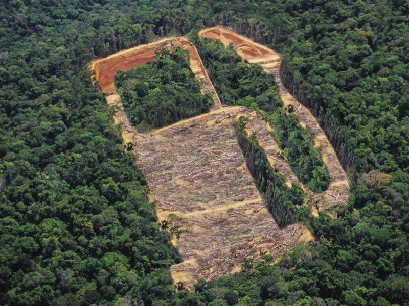Biofuels deforestation