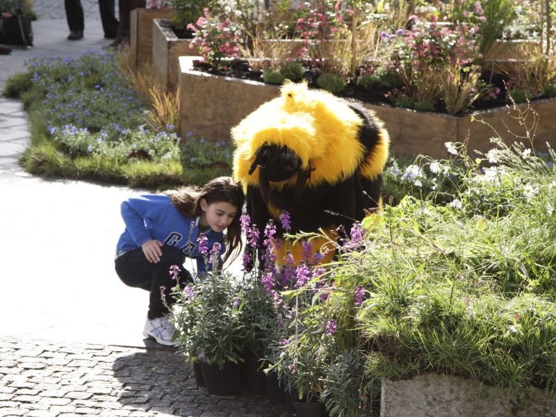 bee cause launch examining bees
