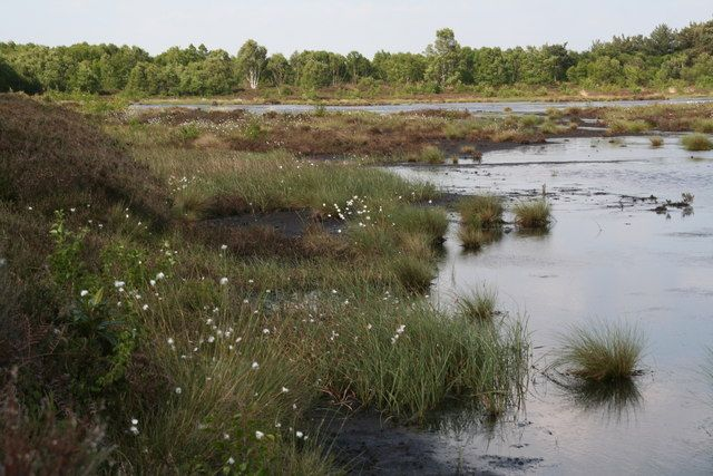 photo of Hatfield Moor, with bog and cotton grass