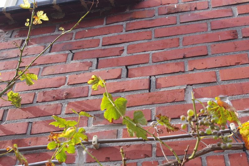 Earthquake damage to the brickwork of Peter and Elly Bruijn's house in Groningen.