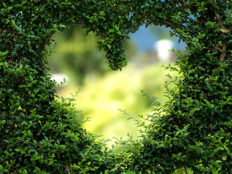 A heart-shaped hole in a hedge