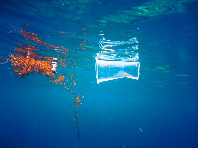Photo of plastic cup floating in the sea