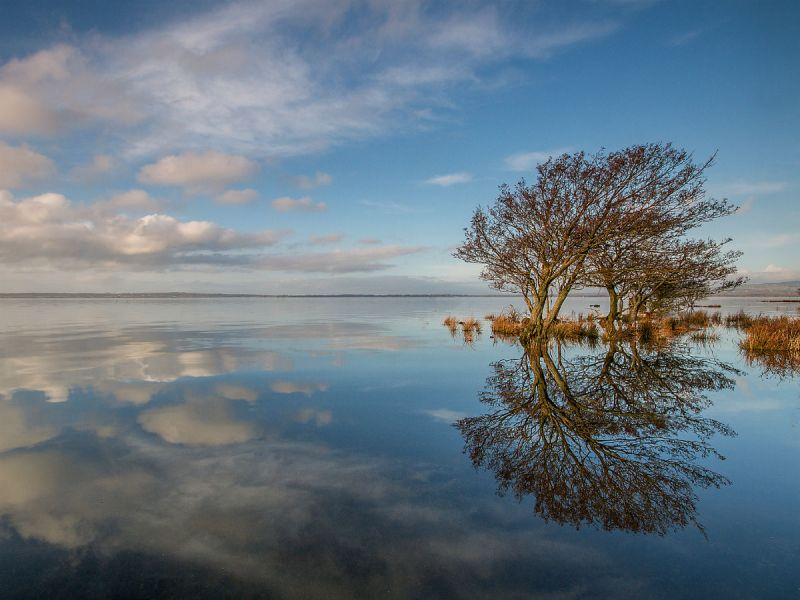 A couple of trees and a blue cloudy sky reflect in the waters of Lough Neagh