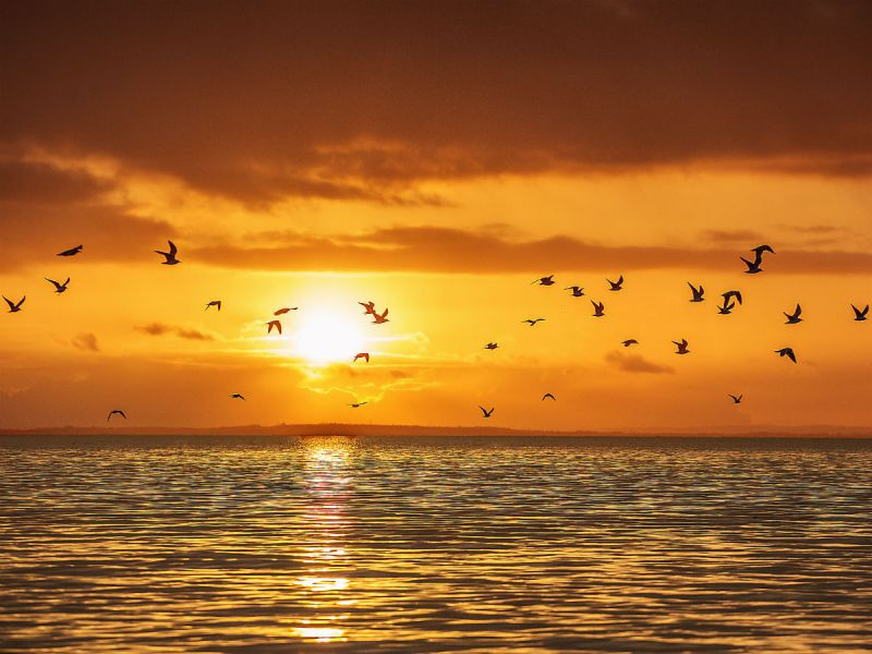Birds fly above Lough Neagh as the sun sets, casting an orange sky