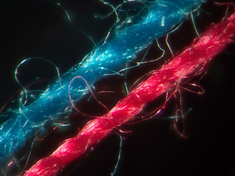 2 Fleece microfibres - one red, one blue - under the microscope