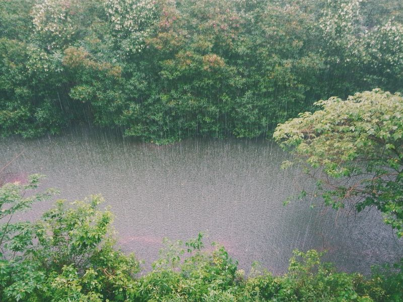Heavy rain falling on trees and a river