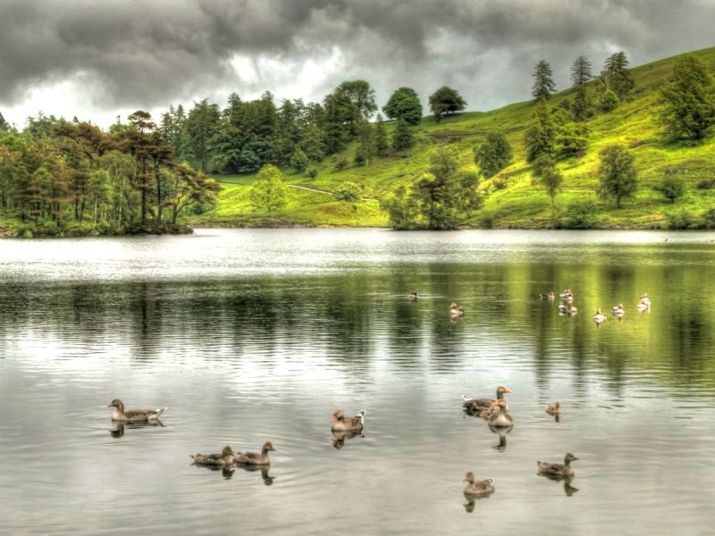 A rainy overcast day at Tarn Hows in the heart of the Lake District.