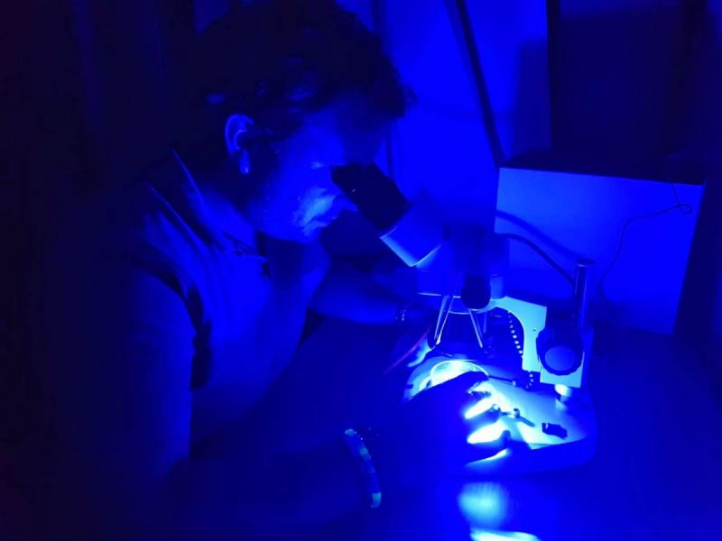 A scientist at Bangor University testing for microplastics using a fluorescence lighting system
