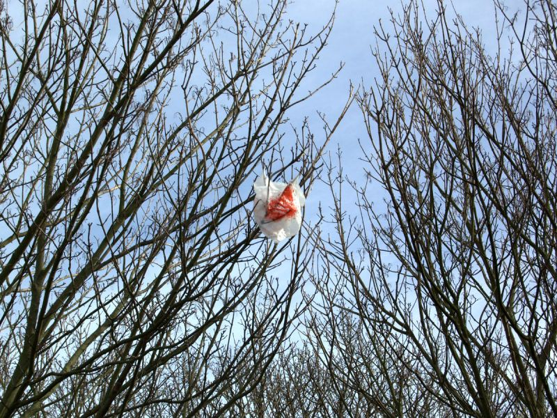 A plastic bag caught in a tree