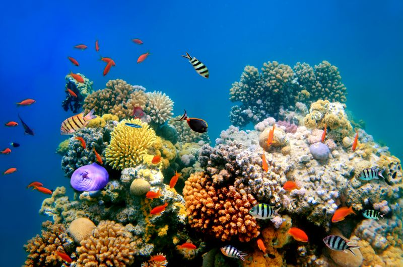 Tropical fish on a coral reef with blue sea background