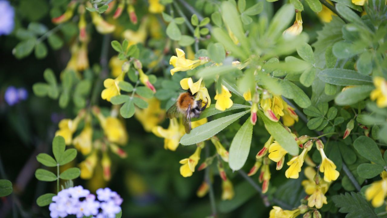 photo of bee feeding on plant