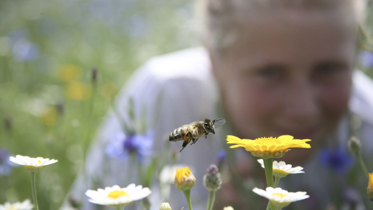 photo of child looking at bee landing on flower