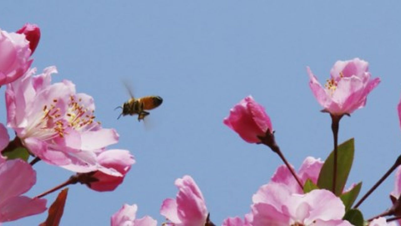 bee about to land on some flowers