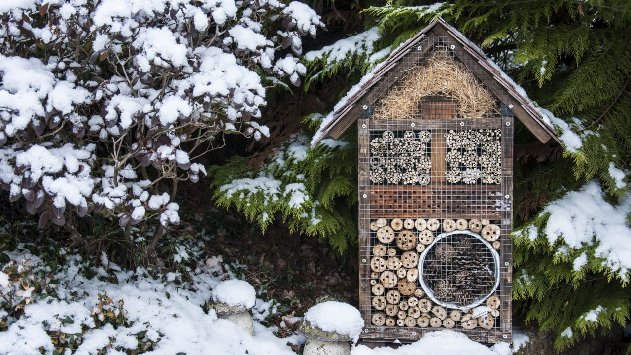 Bee hotel in snowy garden