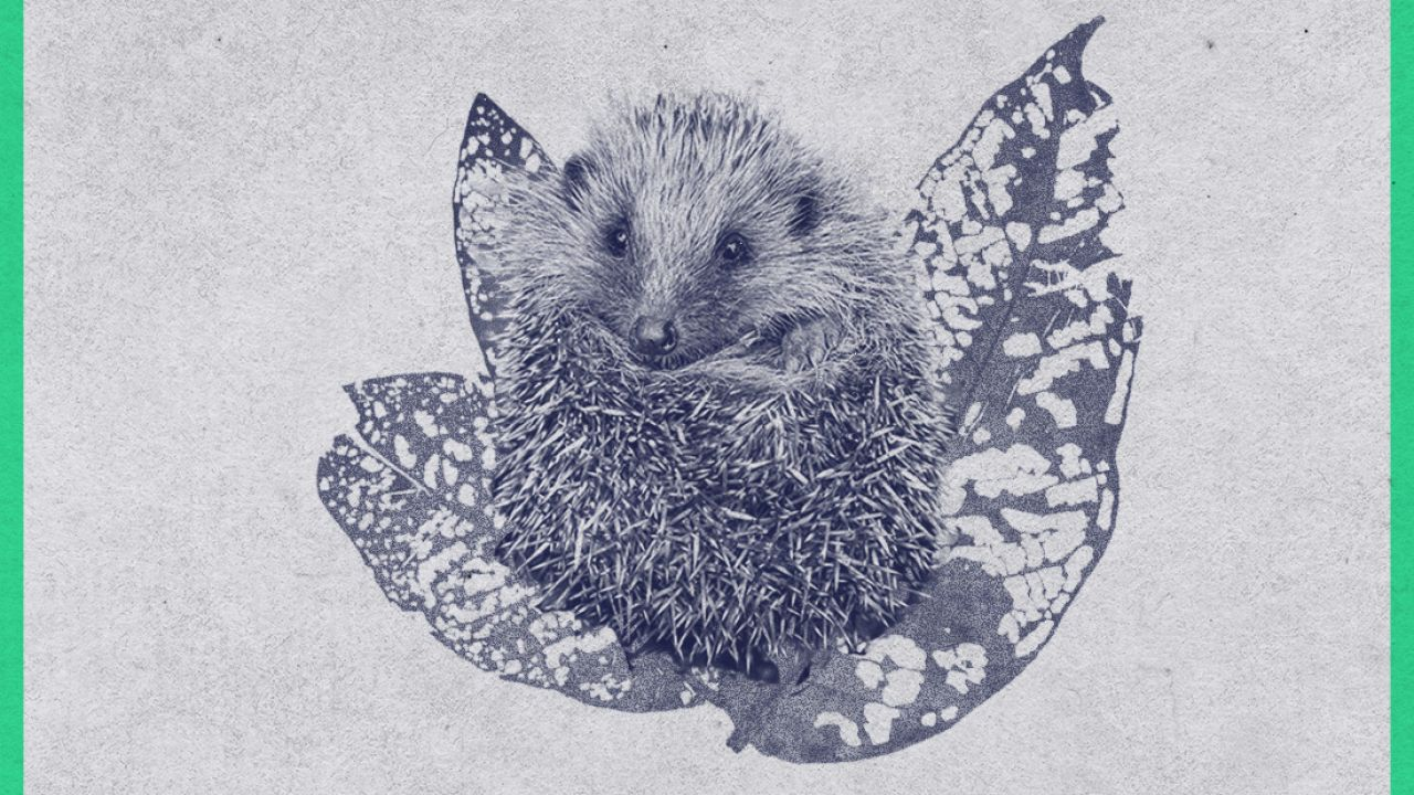 Hedgehog extinction petition