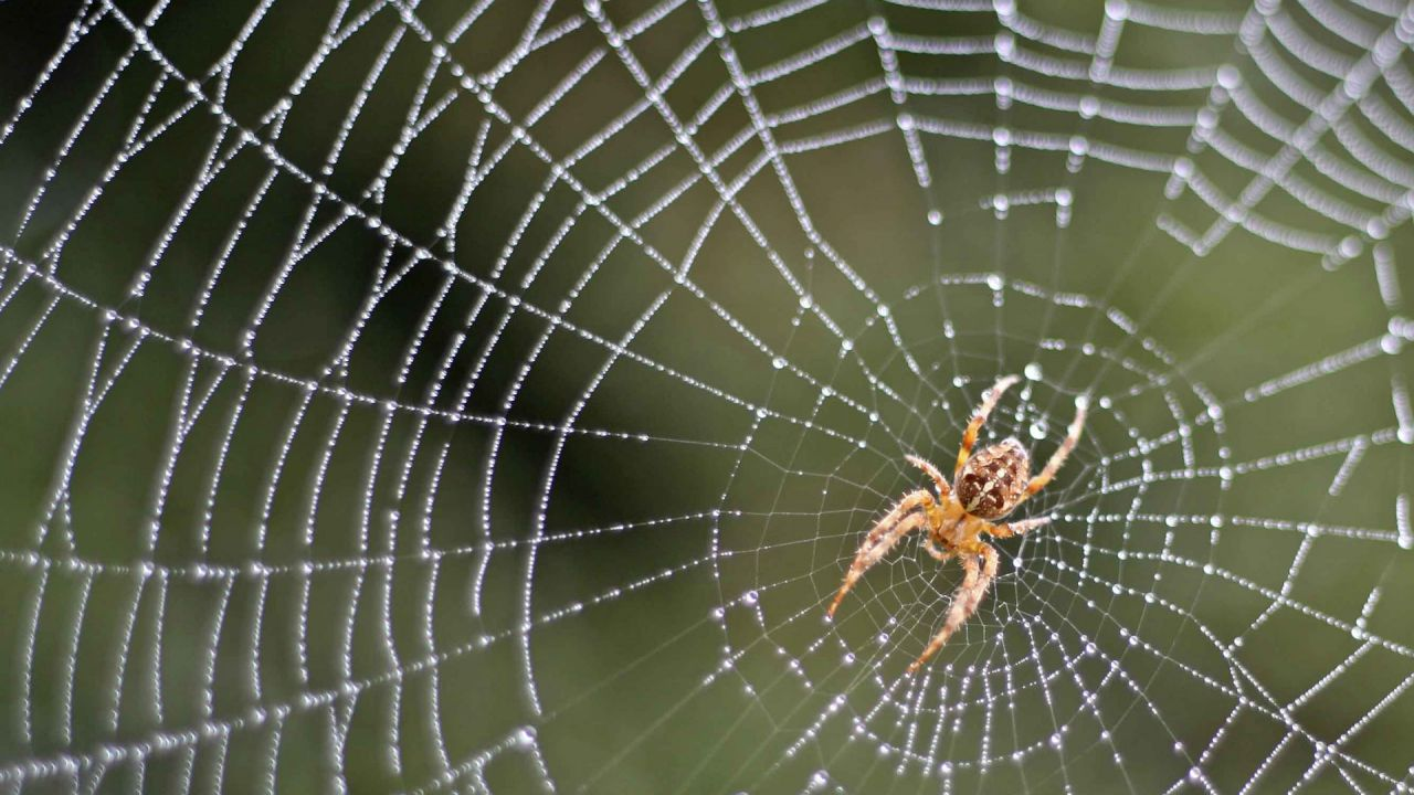 Fear of spiders? 8 reasons to like them more | Friends of ...