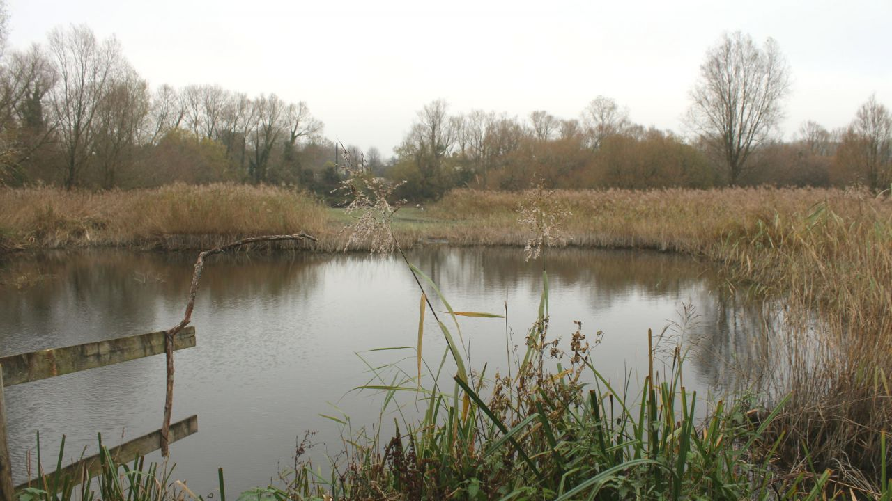 Magor Marsh Gwent Levels