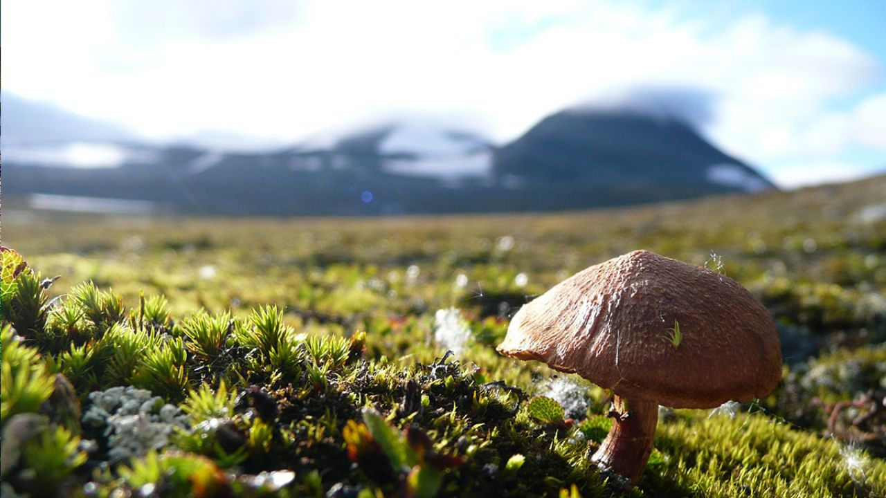 Mushroom on hill in national park with mountains