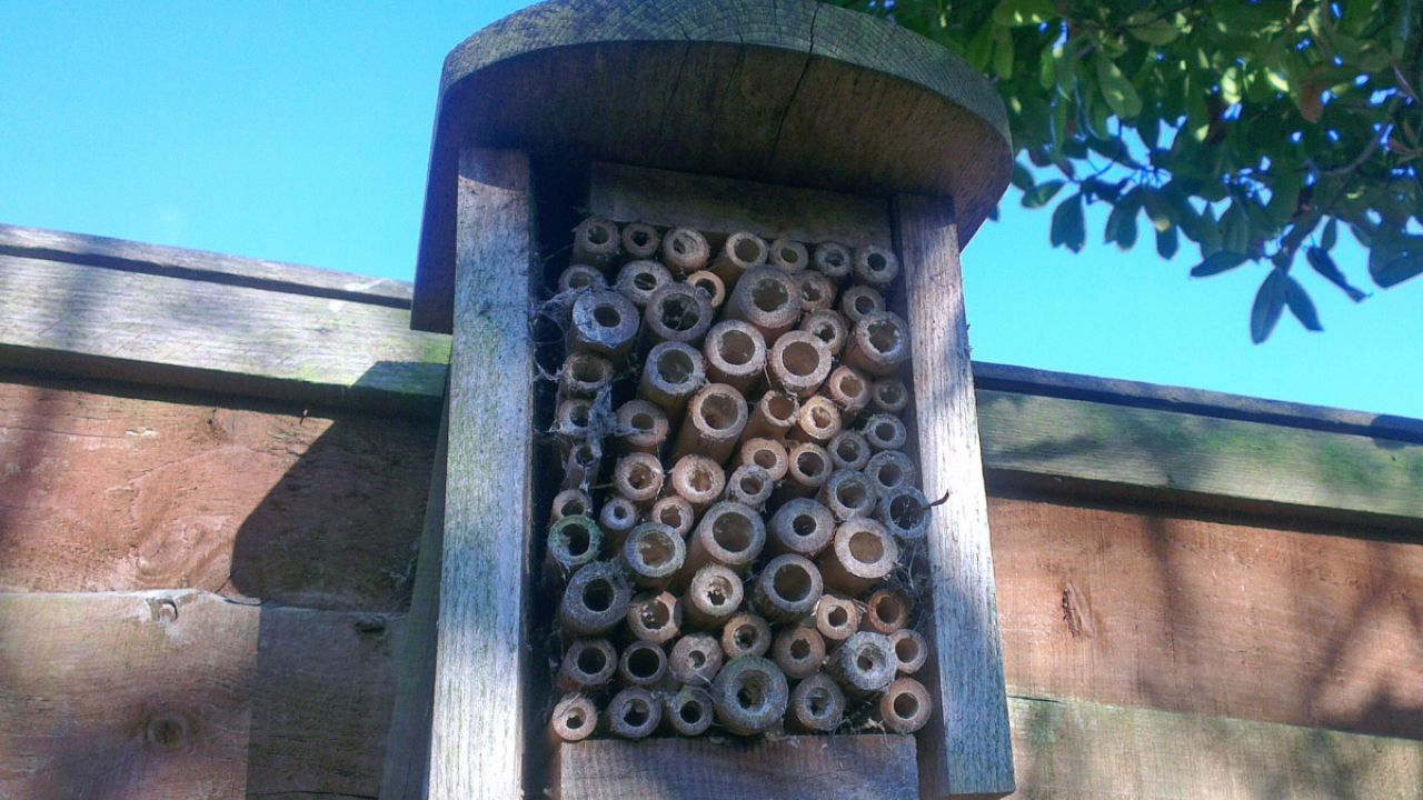 Wooden box bee hotel fixed to a garden fence