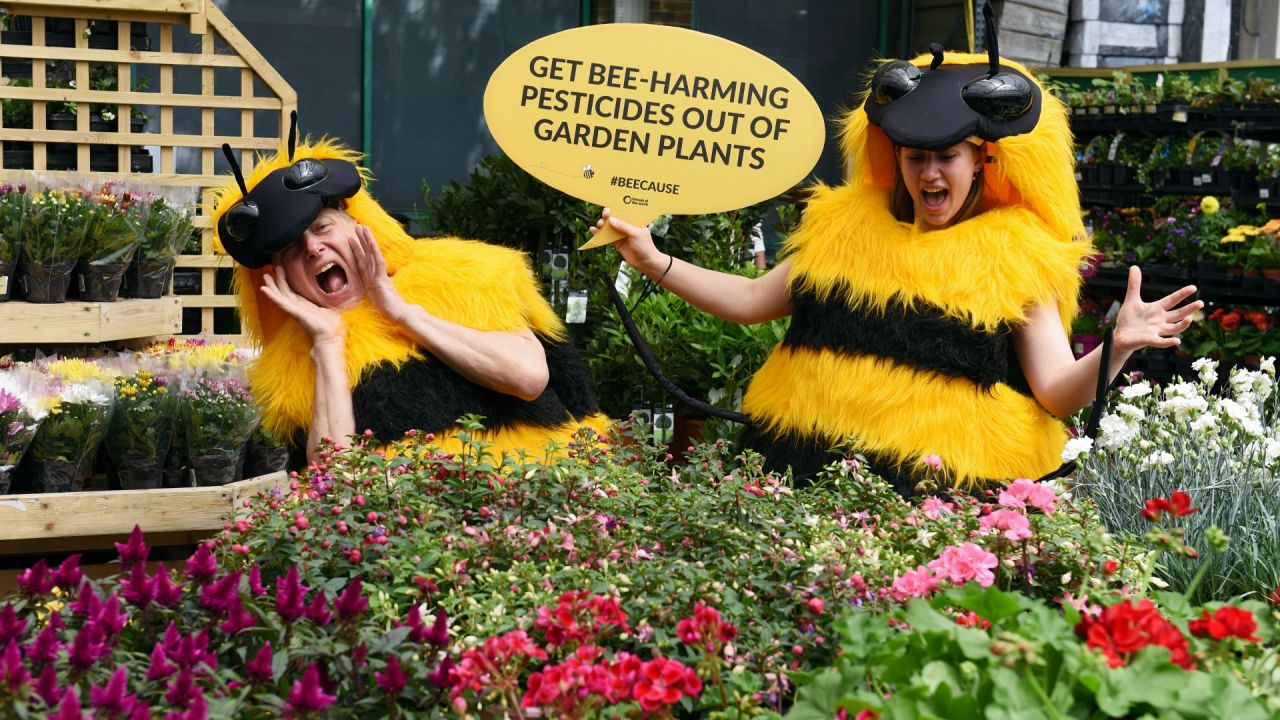 Friends of the Earth campaigning on behalf of bees at a garden centre