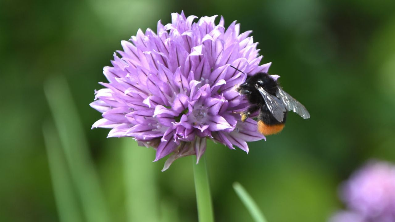 10 easy to grow herbs: Best herbs for cooking and bees | Friends of
