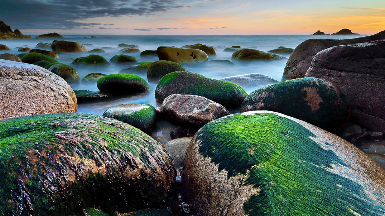 Seaweed covered rocks on a misty beach at sunset