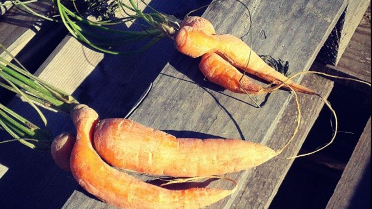 Four wonky carrots on a bench, fresh from the farm