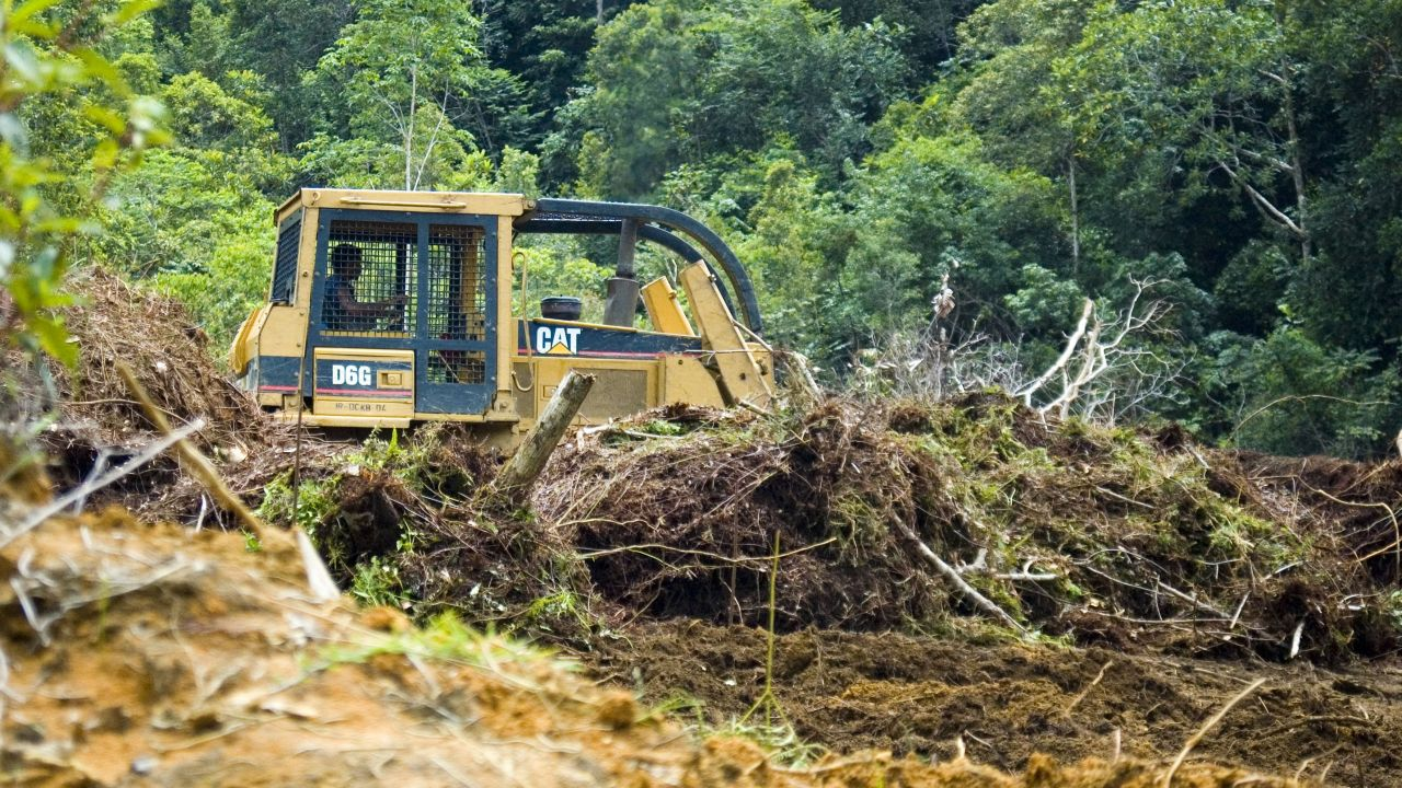 Deforestation to make way for palm oil plantation Indonesia