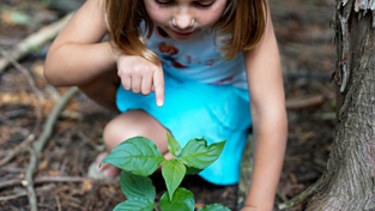 Photo of a girl planting a seedling