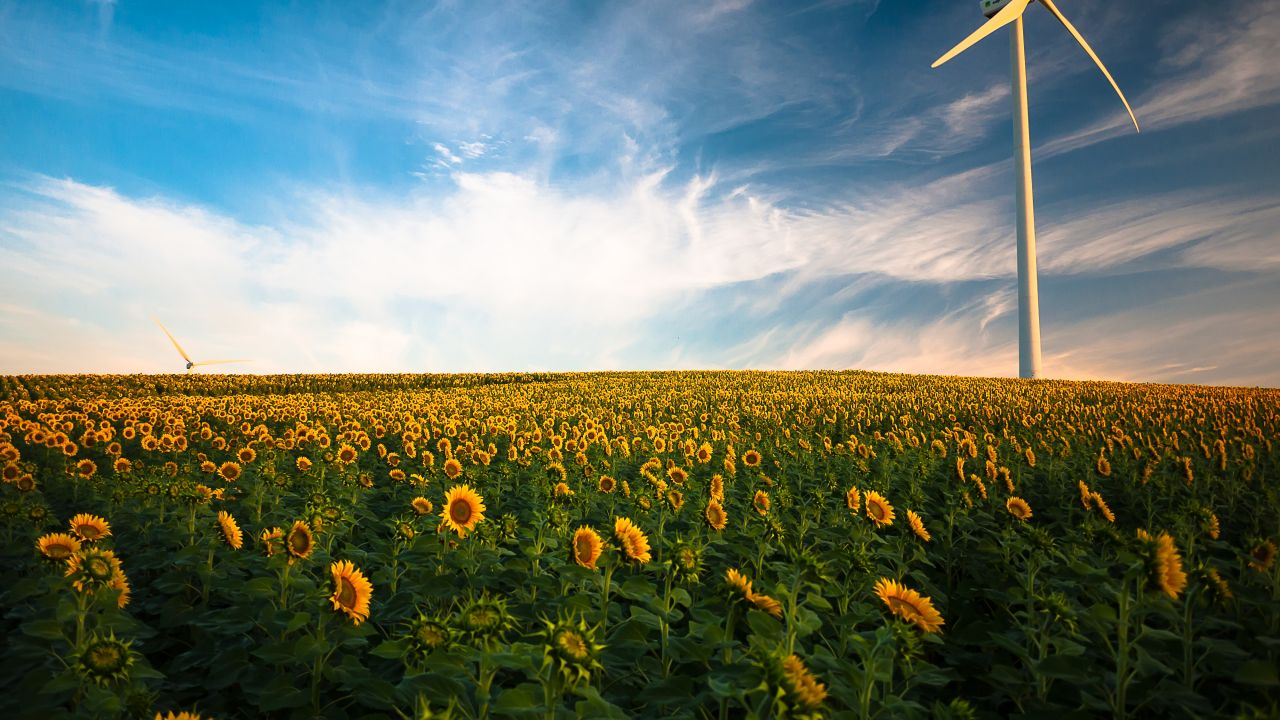 photo of wind turbine in sunflower field