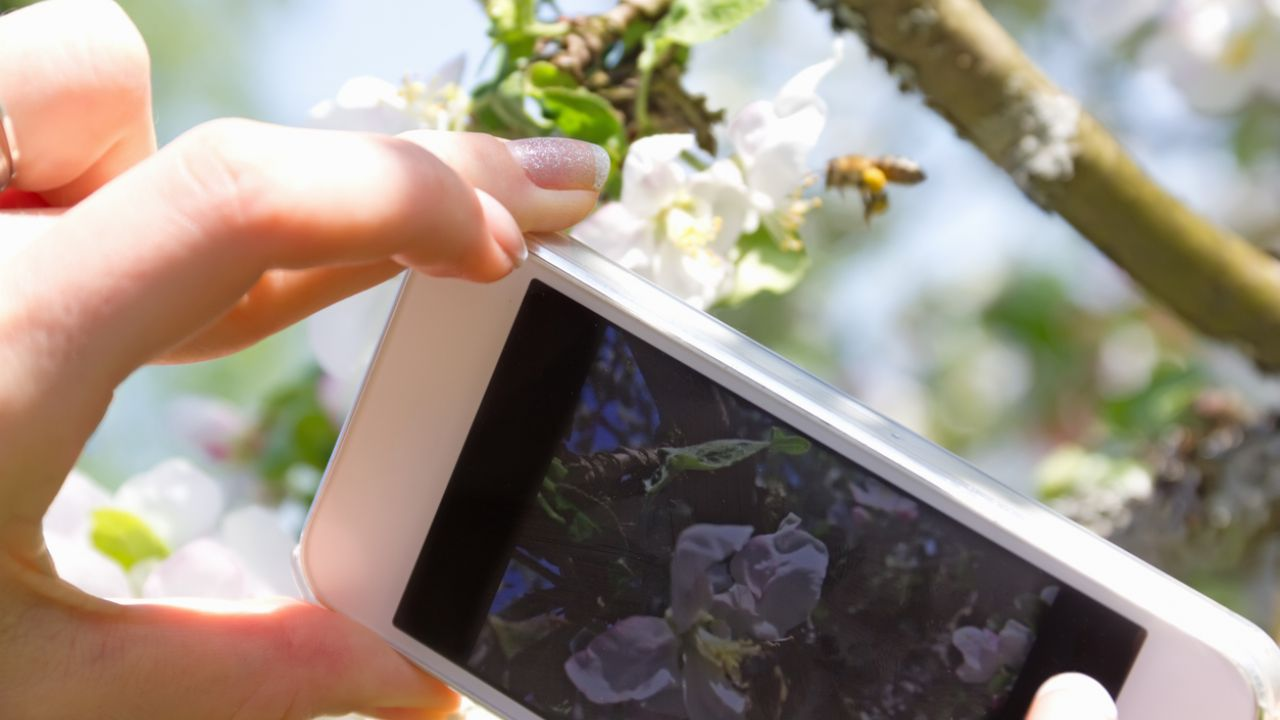 Photo of smartphone camera and bee