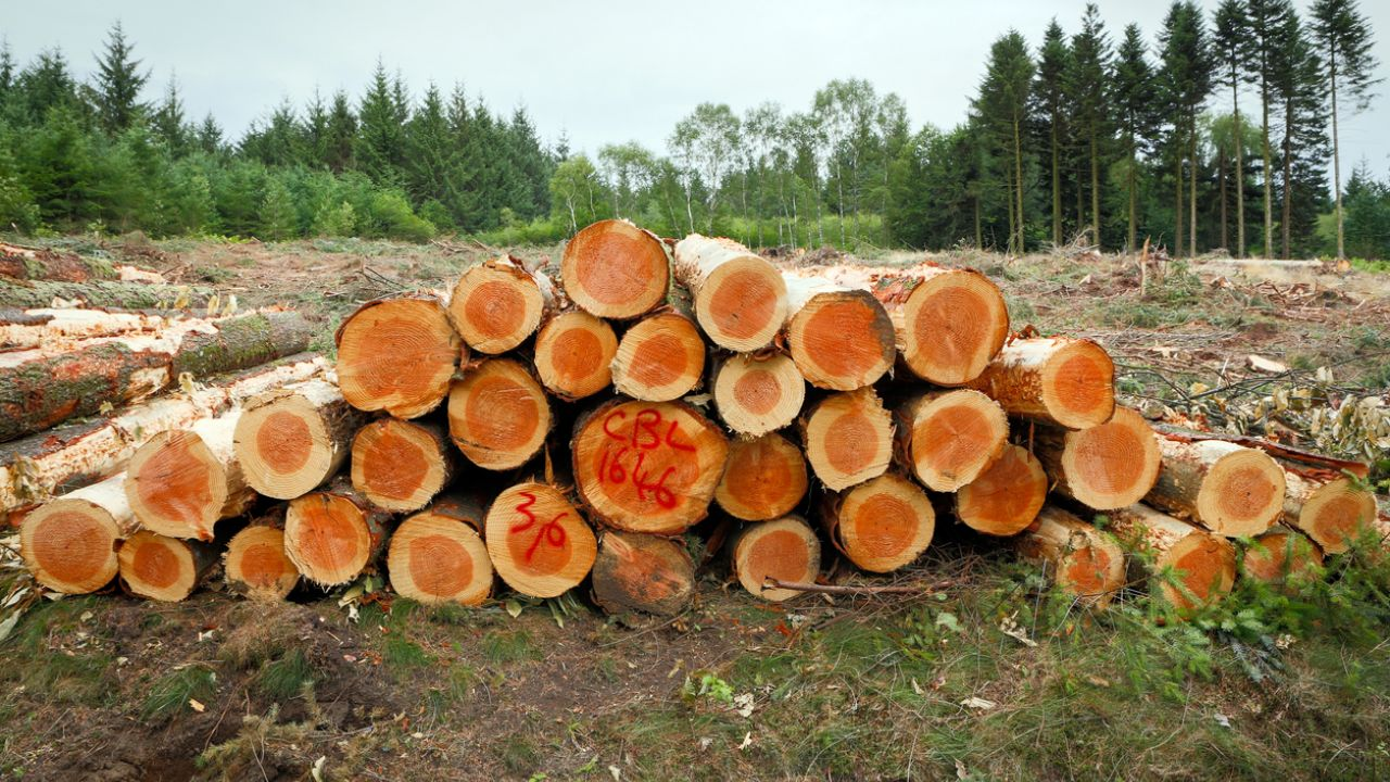photo of felled trees in forest