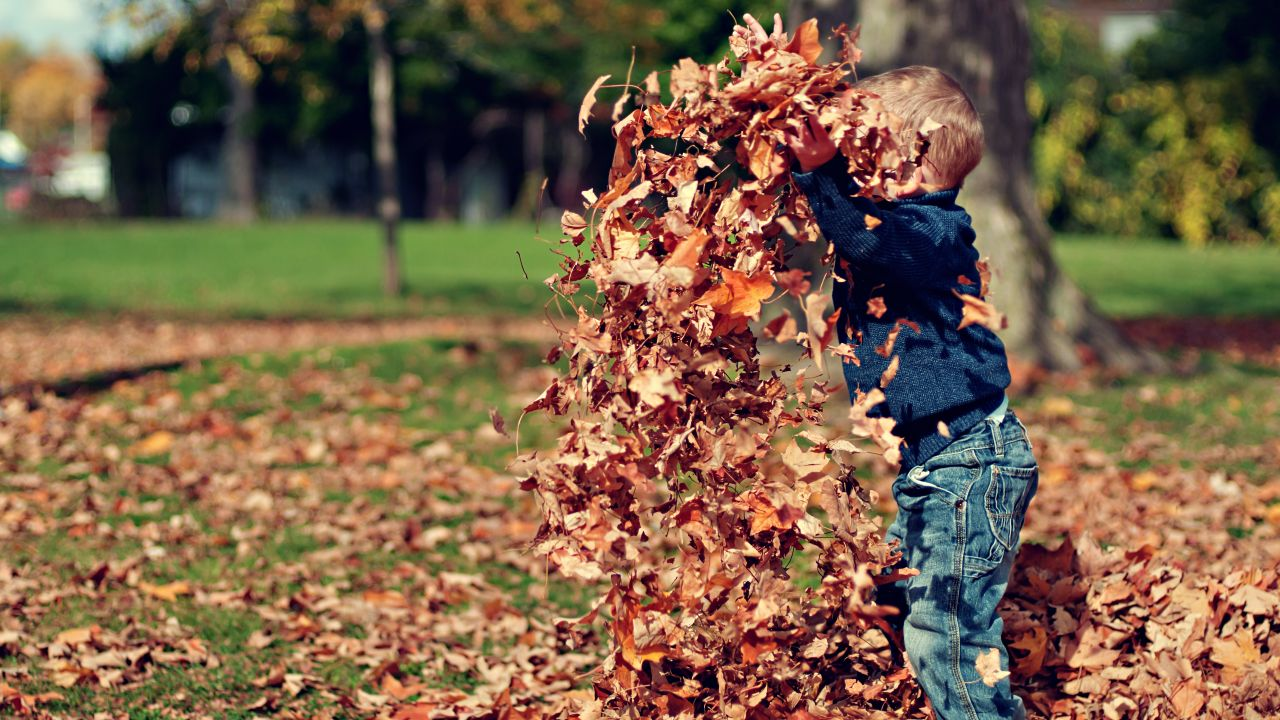 photo of child playing with autumn leaves
