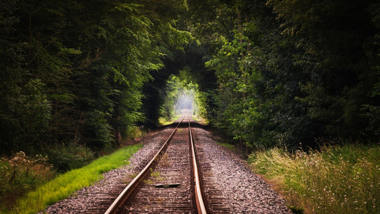 Railway track running through a clearing in a forest